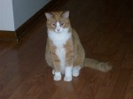 EAST LIMESTONE, AL area: 3 yr old male cat missing from the East Limestone area since the 4/27 tornadoes. Neutered, declawed, and house broken. Contact: Charles.connor@wyle.com