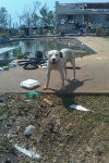 TANNER, AL: found dog. email amandanafe@ymail.com if you are the owner.