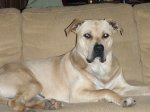Hueytown/Concord area off Warrior river Road: Pitt Bull, Male Intact,Rumored to be an owner surrender, they lost everything. Help me find his family so i can get a release signed, or to reunite. AWESOME dog. Kenan Donaldson Ashurst (fb)