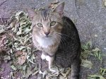 Hoover: Male tabby found in Wine Ridge Hoover the area has lots of trees down and none of the neighbors knew the cat. I will be checking on him daily and making sure he has food and water. 205-790-4613 Margaret Walter-Wilson (fb)