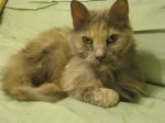 TUSCALOOSA: Found at 7 Forestview in Tuscaloosa: female cat, older, can't be more than 4-5 pounds, recently broke a tooth; very sweet and seems like she was an indoor cat from a loving home. Message Emily Unnasch on Facebook: https://www.facebook.com/profile.php?id=1010760167