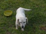 GARDENDALE, FULTONDALE, WARRIOR area: Old large white female dog with collar found. Contact Sherri Jones at: (205) 874-0336 OR sjones@wallacejordan.com