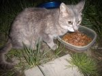 RAINSVILLE, AL: Cat found in Rainsville, AL. Tail is broken. Contact: kishataylor32@gmail.com  Also see Facebook discussion: http://on.fb.me/j8LXSr