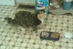 HUEYTOWN, AL: Cat found in Hueytown, AL. She is definitely an indoor cat and belongs to someone. She loves to be held and petted. Message Rhenda Majors on Facebook at: https://www.facebook.com/profile.php?id=562540094 OR have a look at the Facebook discussion at: https://www.facebook.com/ALTornadoAnimals?sk=photos#!/photo.php?fbid=10150169125405095&set=o.206345326063409&type=1&theater