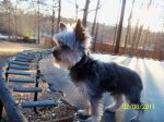 Hanceville, Alabama area: Oliver, he is a Yorkie. He weighs around 3 lbs. If you see him or know of anyone who may have him please reply. Kara McAnnally  (fb)