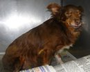 SMITHVILLE, MS: This is the little dog that was found in Smithville, MS and brought to us. Please let us know if you know who she belongs to; we would like to help her get back to her family! Tupelo-Lee Humane Society. Message Melinda Ware on Facebook: https://www.facebook.com/mcbware2