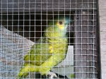 RUSSELLVILLE, TN: Found parrot. Contact Leia at momleia@comcast.net or message her on Facebook at: http://www.facebook.com/leia.davis
