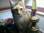 HUEYTOWN, AL: Cat named Tater missing from Hueytown, AL. Contact Laura Moss 6835 Moss Road Hueytown, AL 35023 OR 205-706-9046