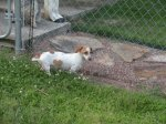 GARDENDALE, FULTONDALE, WARRIOR area: White with brown spots, female dog found. Contact Sherri Jones at: (205) 874-0336 OR sjones@wallacejordan.com