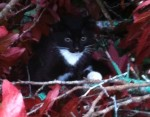 Blount County/Oneonta AL Kitten found at the top of a 50 foot walnut tree. 6 to 8 weeks old. Contact: abauth@gmail.com