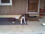 CONCORD, AL: Dog missing in Concord, AL. Contact Tracey at: traceyhsmith68@aol.com