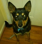 LEEDS, AL: 1-year-old male German Shepherd mix named Erwin lost from the Leeds, AL area. Neutered; wearing blue collar; no tags; very friendly. Contact: Frances (205)743-8933 or fmontgomery@autowtruck.com