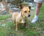ETOWAH COUNTY, AL area Female dog found in the Whoton Bend area of Etowah County, just of Hwy 77. First spotted 4/29 with a similar looking dog. Keeping her safe until her owner can be found. If we find her buddy, we will keep him/her safe too. Contact: (256)591-0794.