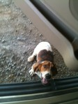 ARLEY, AL: This dog showed up at our house in Arley, Alabama (Winston County); no collar; female; seems to have problems with hips when she walks. May be a storm pet. Contact email is kmwelch56@gmail.com or rdwelch74@gmail.com