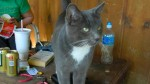 CAHABA HEIGHTS: Gray, male, unneutered cat. Has a white spot on his chest as well as white feet. I've been taking care of him outside, but can't bring him in the house because I have two cats of my own. Contact Russell Noyes: 205-910-7948 OR russell.noyes@gmail.com