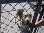 ATHENS, AL: Possibly German Shepherd mix was found in Athens, AL. She was found with scratches on her. She seems like she was an inside dog and is missing her owner a lot. Contact Miranda at: mjmurphy2@crimson.ua.edu