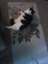 TUSCALOOSA, AL: Cat missing from 15th street/Veteran's Memorial HWY behind Quail Valley apartments in Tuscaloosa, AL. Her original home was on 15th street in the neighborhood just above Hobby Lobby. Her house was completely destroyed and I literally pulled her out of the rubble. Contact Bonnie at (205) 233-0609