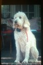 REUNITED! Huntsville, AL: dog Callie is missing from Blossomwood. call 256-289-4995