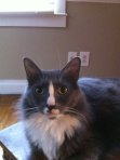 REUNITED! Alberta City: lost cat, bob tailed, male, likes to hide in cabinets. Contact: 205-399-1754