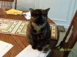 REUNITED! ATHENS, AL: Lost cat named Daisy; last seen in the area of Camden Court near McCulley Mill. Contact Jennifer Pitts Adair at: jenniferpitts14@yahoo.com
