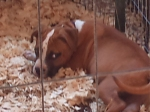 REUNITED! PRATT CITY, AL Found boxer puppy that was brought to us from Pratt City, AL. Contact Candace at: synathe@gmail.com