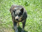 REUNITED! OAKMAN, AL: This sweet boy was reunited at the Ready Walker CERT Animals in Disaster Shelter on 5/13! His name is Cowboy and he is 16 years old.
