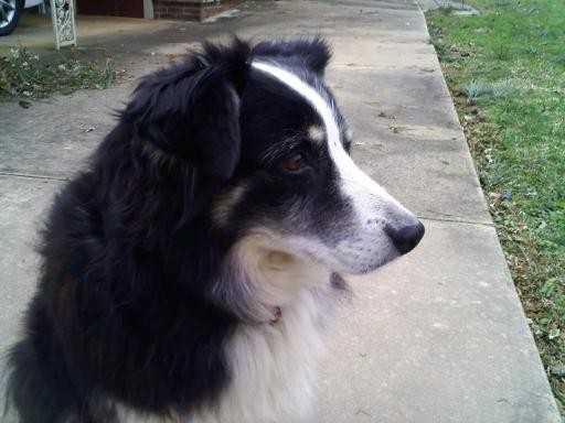 LANGSTON, AL area: Dog lost in the Langston, AL area. Contact: shea.yarbrough@yahoo.com