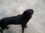 REUNITED! PLEASANT GROVE, AL: lost dog named Gimpy. Contact info is 859 576 9641. Laurenlou2824@gmail.com