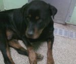 NEW FUREVER HOME! DEKALB COUNTY, AL: Dog found. Contact Dekalb County Animal Adoption: 256-304-0474 or come by at 2601 Jordan Rd SW Ft. Payne, Alabama. Also see Facebook discussion at: http://on.fb.me/mM6GA0