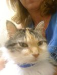 REUNITED! PLEASANT GROVE: Cat missing in Pleasant Grove, off 11th Way. She is very old and needs medical attention. Message Terrie Wheat on Facebook at: https://www.facebook.com/profile.php?id=1273653579