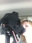 REUNITED! Lost in Pleasant Grove: 4 month old Great Dane, his name is Zuse. He is black with a white patch on his chest, also his left paw is slightly bigger than his right.